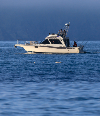 Sea trips