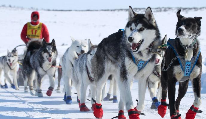 Dog sleighing