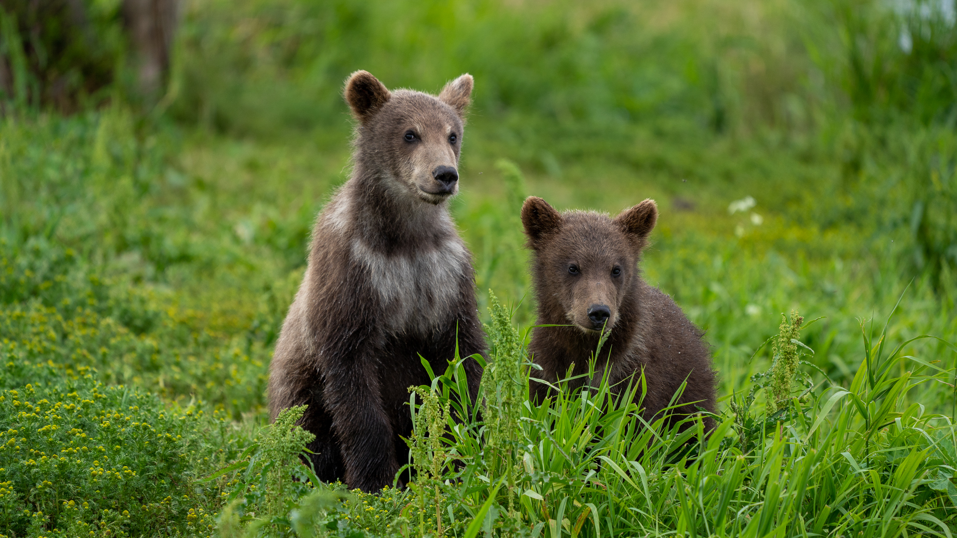 At arm's reach and even closer, you can take your best pictures of wild animals in Kamchatka.